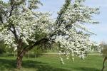 Палёт над квітнеючым садам