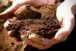 На чем растет наше благосостояние. Белорусские ученые собрали «досье» на почвы страны