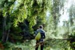 В 75 районах нельзя в леса