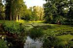 863 тысячи гектаров природных болот сохранилось в Беларуси