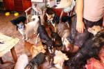 10 собак и 2 кошки удерживали в квартире многоэтажки в Полоцке