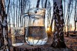 Брестские лесхозы начали заготовку березового сока
