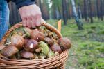 В Витебской области грибников ищут не первые сутки