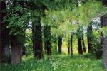 У Верхнядзвінскім раёне незаконна высеклі 39 кубаметраў лесу