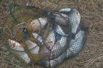 Затрыманы жыхар аграгарадка Азёры, які лавіў рыбу сеткамі