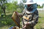 Как семья пчеловодов сделала увлечение местной достопримечательностью