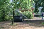 Наступствы буры, якая абрынулася на Мінск