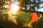 Конец августа и начало сентября ожидаются горячими