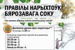 Правілы нарыхтоўкі бярозавага соку