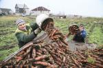 Морквапад у Ячаве
