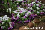 У Мінску выпаў снег