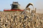 Как будут сотрудничать Россия и Беларусь в аграрной сфере?