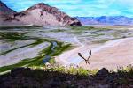 «Али» в Тибете