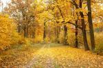 И у осени – светлые мечты