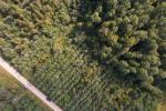 Спасая лес, помочь себе