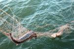 Браканьеры на рацэ Случ глушылі рыбу электравудай