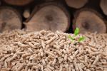 В Борисове начнет действовать пеллетный завод
