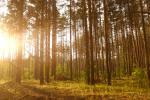 Маладыя памочнікі лесу