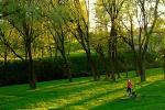 Парк «Липки», бензопилы и тонометры