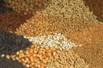 В ЕАЭС будут развивать собственное семеноводство