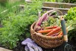 Какие удобрения нужны моркови, луку, капусте?
