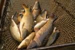 Браканьераў затрымалі на азёрах Віцебшчыны
