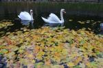 Залатая восень у Гомелі