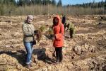 Молодой сосновый лес появился в Минском районе