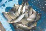 Рыбгас «Свіслач» збіраецца пашыраць аб'ёмы і павялічваць асартымент*