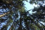 У Рэчыцкім раёне з'явіўся лес «Юнацтва»
