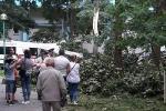 Бура валіла дрэвы ў Брэсце, у парку пацярпела дзіця