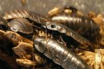 Кітаец утылізуе харчовыя адходы з дапамогай насякомых