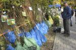 Садаводы расказваюць пра новыя трэнды восеньскіх кірмашоў
