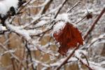 Балтыка прынясе нам мокры снег