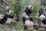 Панды чакаюць!
