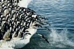 Сотні мумій пінгвінаў
