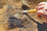 Вторую очередь археологического музея в Беловежской пуще планируют открыть в этом году