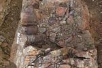 Найдено растение возрастом 370 млн лет