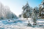 Когда декабрь снежку подбросит