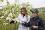 Как появляются новые сорта груш и яблонь