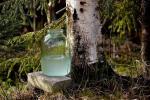 У Асіповіцкім раёне бярозавік будзе каштаваць 14 капеек за літр