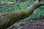 На лесаруба ўпала дрэва