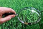 У школах Магiлёўшчыны створаны i дзейнiчаюць 88 профiльных аграрных класаў