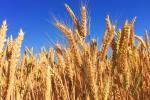 Сельхозпроизводство в странах ЕАЭС за последние годы выросло на 19 %