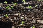 У Столінскім раёне крадуць урадлівы слой зямлі з лясоў