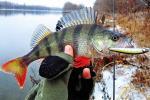 Мужчына перавозіў 67,2 кілаграма рыбы без дакументаў