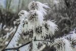 Морозная погода будет в Беларуси на этой неделе