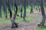 У Воранаўскім раёне мужчына вывез суседа ў лес і прывязаў да дрэва