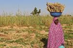 У Нігерыі невядомыя забілі больш за 60 чалавек