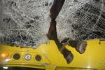 Под Жлобином лошадь при столкновении с автобусом влетела в салон